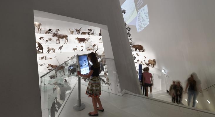 Museum-Vic-Wild-Amazing-Animals-2010